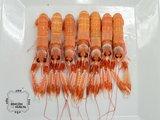 Cigala de Huelva Pequeña C5 (26 a 40 piezas en kilo)